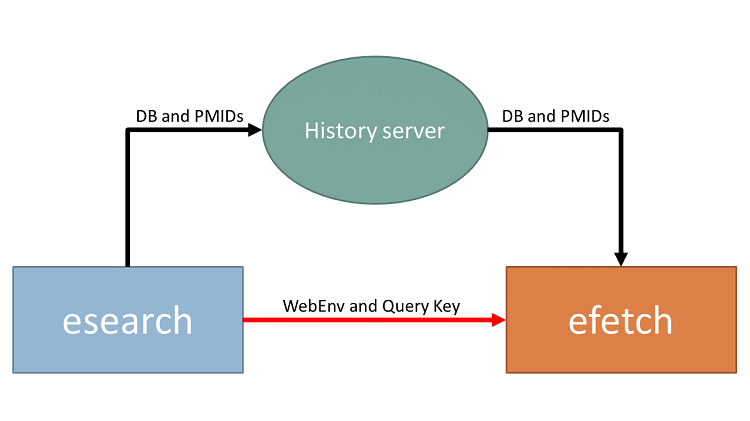 A diagram showing an esearch-efetch pipeline, using the History server: The esearch command pipes stores a DB identifier and a list of PMIDs on the history server, and pipes the Web Environment string and Query Key to an efetch command; the efetch command uses this information to retrieve the correct DB identifier and PMIDs from the history server